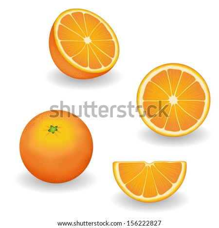 vector   oranges  four views
