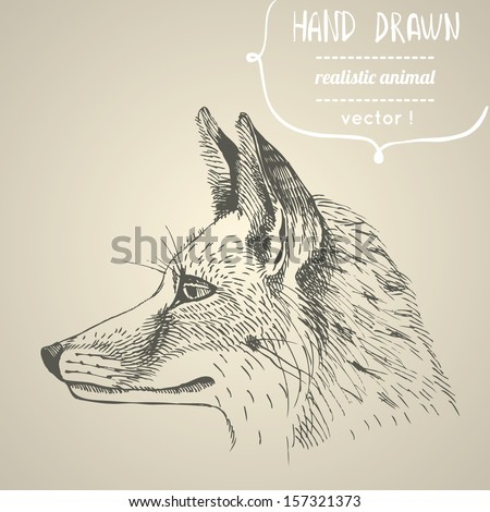 fox portrait hand drawn vector