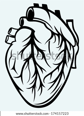 human heart isolated on blue
