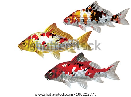 raster version of vector  koi
