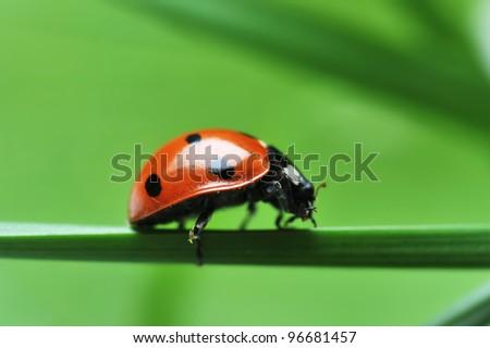 red ladybird with seven black