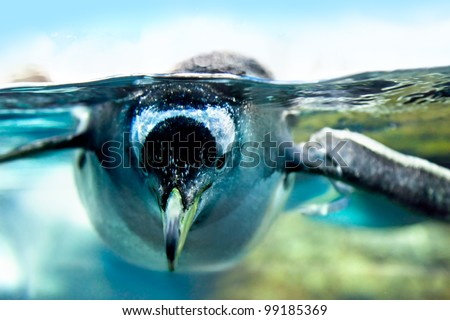 penguin is under water looking