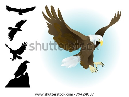 collection of eagles landing