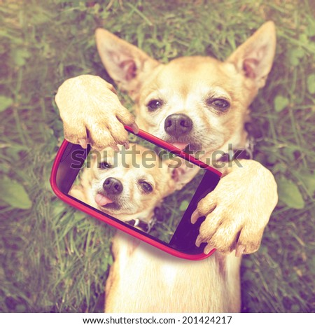 Cute Chihuahua Grass Taking Selfie On Stock Photo