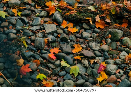 A detail shot of the  Bank of the river floor in autumn - stones and leaves.