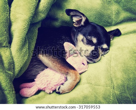 a tiny chihuahua cuddling with his pink bunny stuffed animal toy under a green blanket