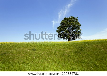 a tree growing in the field. summer (spring) season