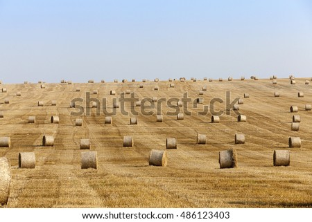 agricultural field on which lie Straw Haystacks after harvest, blue sky