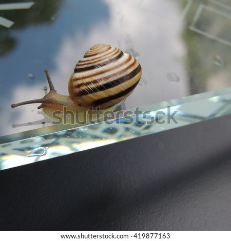 Beautiful snail on a transparent glass on a black background closeup
