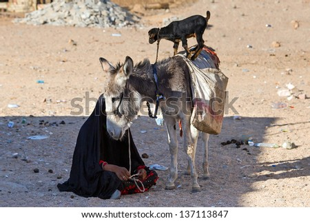 Bedouin woman with donkey on the desert,  Egypt