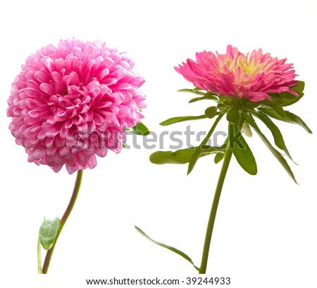 2 big photo of isolated flower