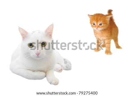 cats on a white background