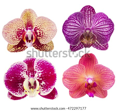 Collection of orchid flower isolated on white.Orchid. Orchid flower.