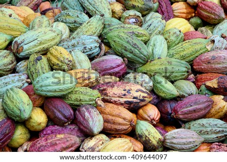 Colorful cocoa pods