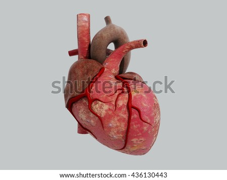 3D Human Heart - Anatomy of Human Heart