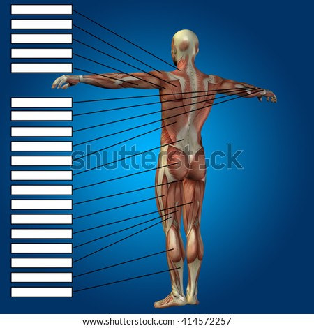 3D illustration of a concept male or human anatomy, a man with muscles and textbox on blue gradient for body, tendon, fit, builder, strong, biological, skinless, shape, muscular posture health medical