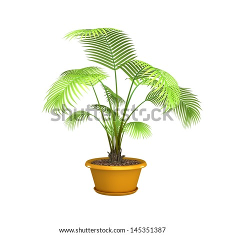 3d, palm tree isolated on white background