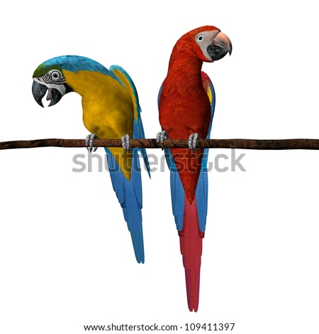 3D render of 2 scarlet macaws on a wooden perch isolated on a white background