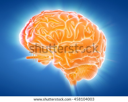 3d rendered medically accurate illustration of a glowing brain