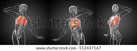 3d rendering medical illustration of the human lung