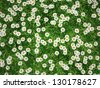 3d sunny flower meadow - full of daisies - stock