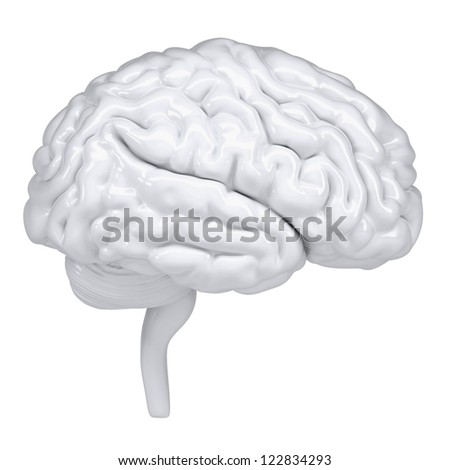 3d white human brain. A side view. Isolated render on a white background