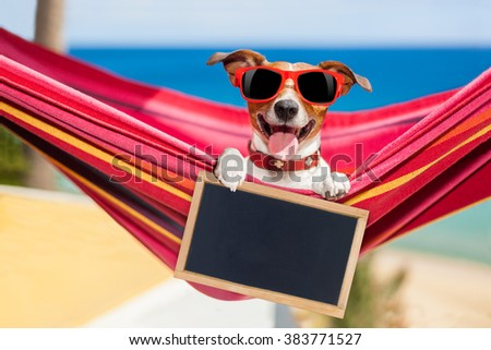dog relaxing on a  hammock  with red sunglasses