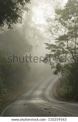 Foggy scene from a tropical forest.Thailand