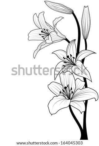 illustration of lily in black and white colors
