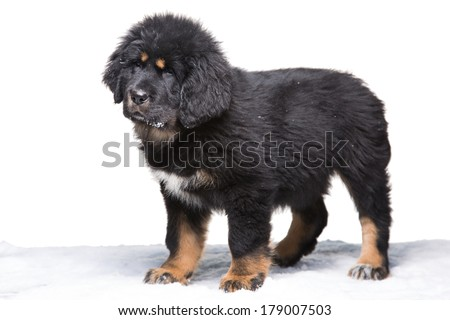Light brown and white puppy Stock Photos, Illustrations, and Vector ...