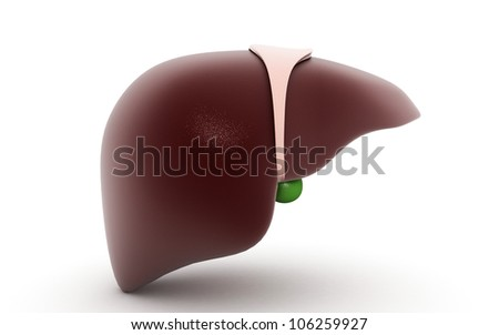 Liver and Gallbladder in white background