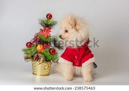 Puppy meets New Year in studio in a neutral backround