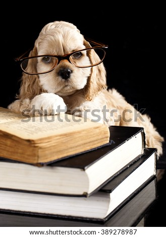 puppy with glasses and book