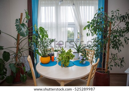 room flowers and plants