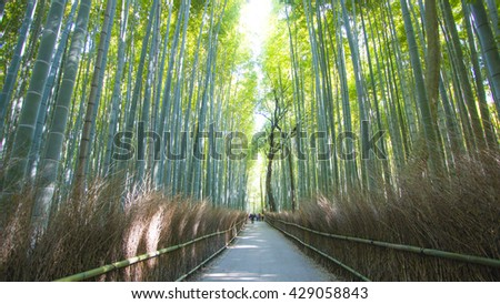 The bamboo forest path