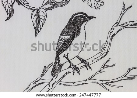 The original drawing of birds on white paper, Little Pied Flycatcher