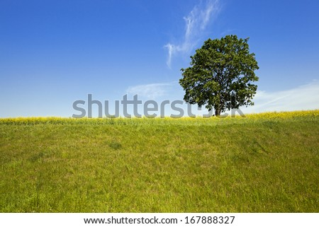 the tree of a birch growing in a field on which grow up plants