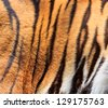tiger fur - colorful texture with orange, beige, yellow and bla - stock photo
