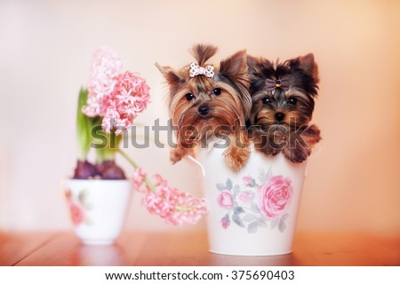 Two beautiful dog sitting in a cup. Near the puppies a vase of flowers. Pink flowers and cute dog in the room.