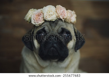 �¡ute pug puppy face in a wreath of flowers closeup