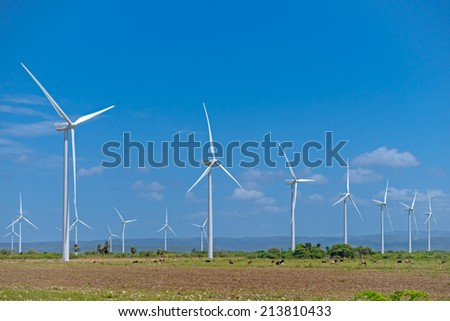 Wind power farm, field, herd of cows