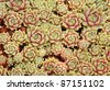 A background close up of garden sedum in the home perennial garden. - stock photo