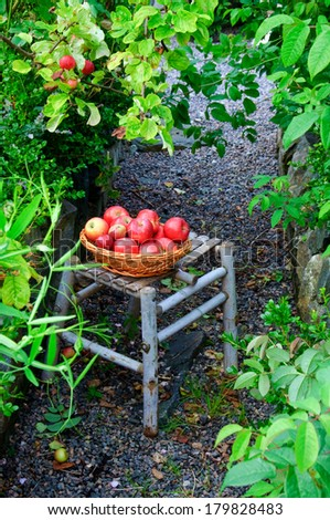 A basket of red apples in front of an apple tree in an overgrown garden