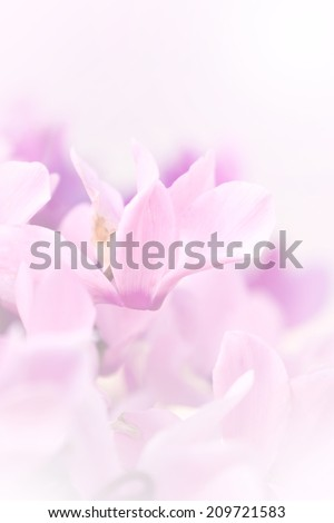 A beautiful pink flower in soft focus may use for wedding background.