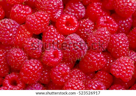 A beautiful selection of freshly picked ripe red raspberries.
