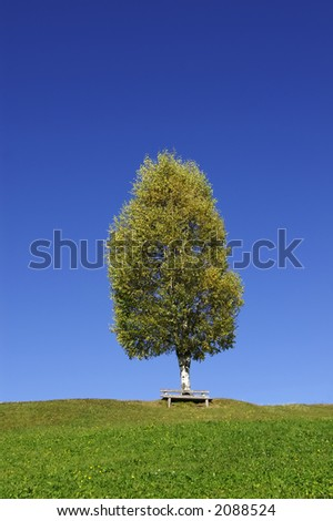 A birchtree on a hilltop in autumn