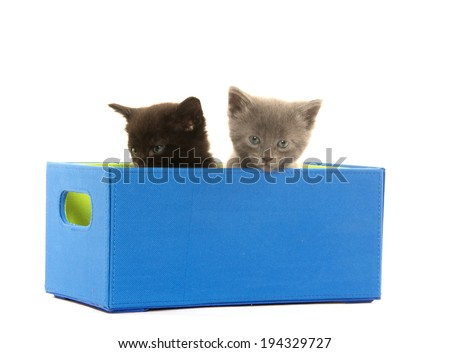 A black and a gray kitten sitting inside of blue box on white background
