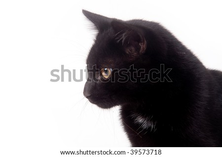 A black cat on a white background