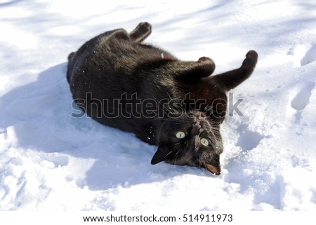 A black cat rolls around in the snow