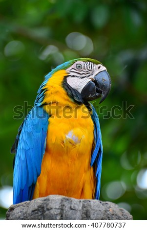 A blue and yellow parrots